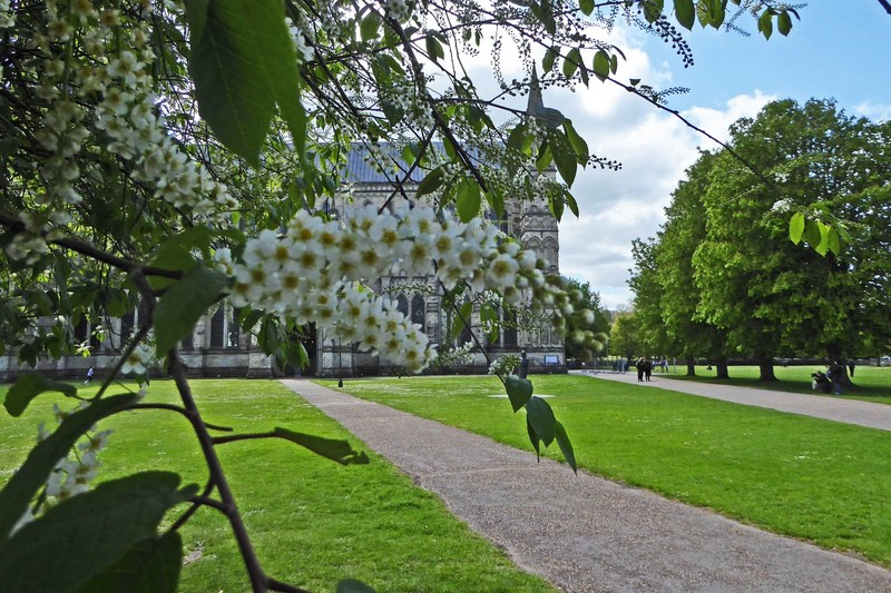 Salisbury Cathedral in Spring