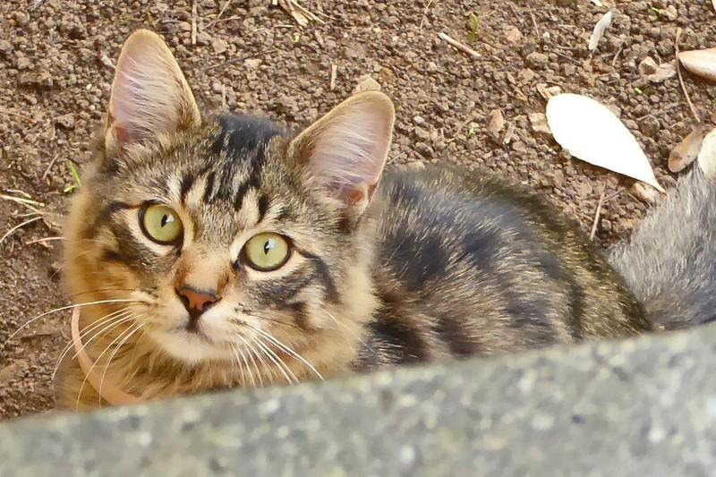 Cute kitty we saw chained in a back yard near parking in Daglan