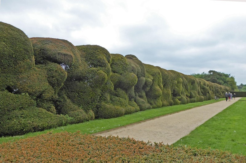 Montacute House Gardens - the famous wibbly wobbly hedges