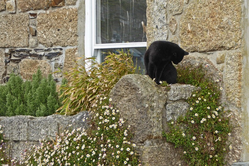 Kitty in Mousehole - Cornwall