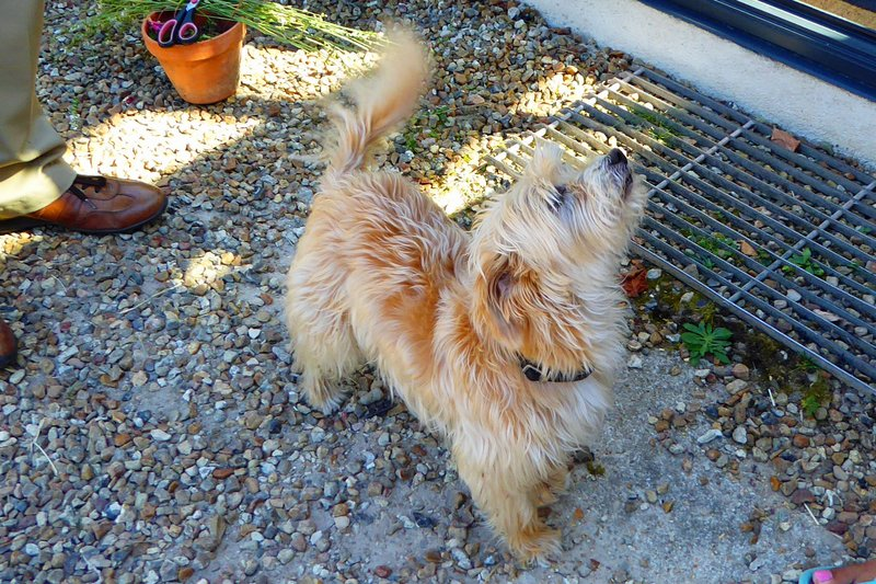 Basil, the Wonderdog