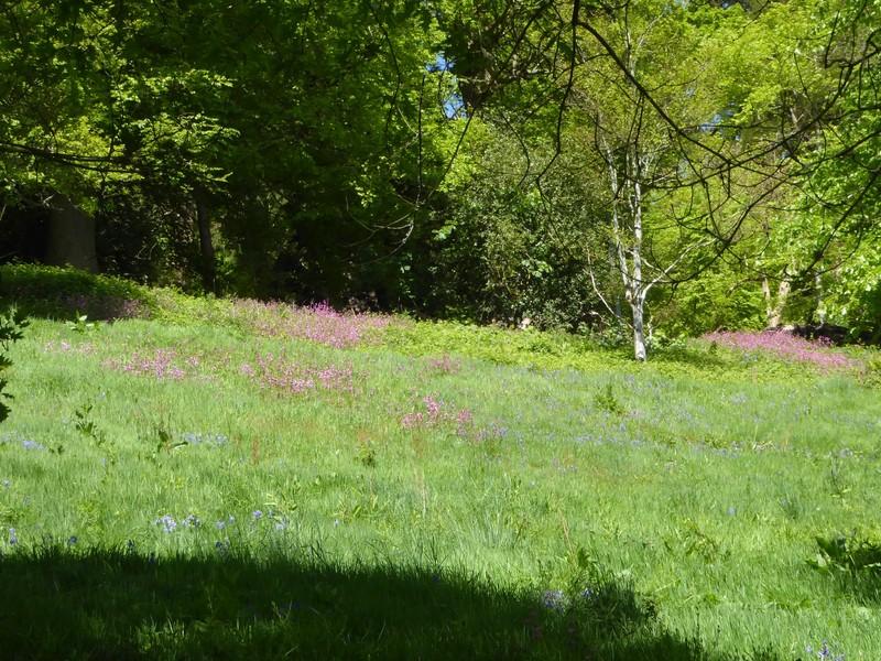 Wildflowers in the Killerton House Gardens