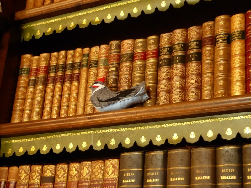 Knightshayes Court - Stuffed bird in the Library