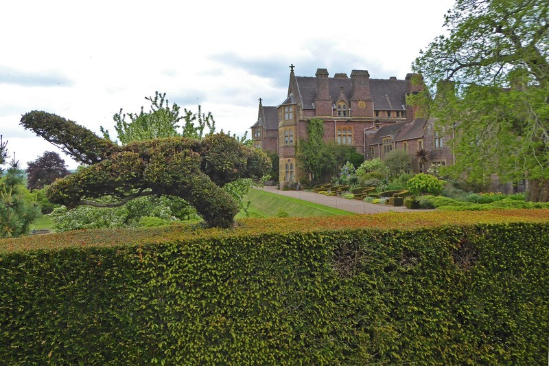 Knightshayes Court - Garden Topiary with a view of the house