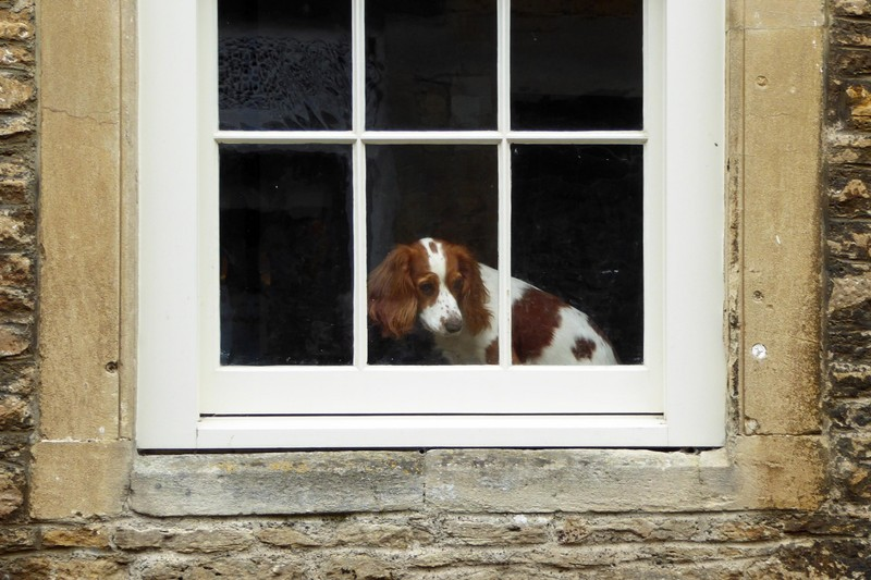 Pup in the window - Lacock