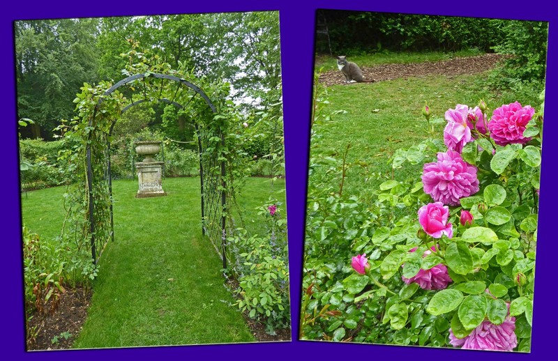 The Rose Garden and Abby, the Abbey Cat
