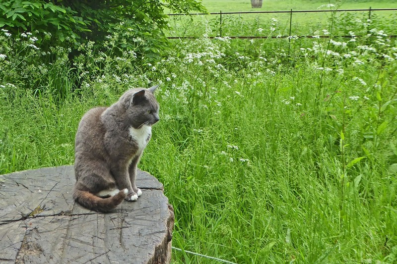Abby, the Abbey cat who followed us through the Gardens