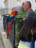 Man with his feathered friend near Place du Tertre in Montmartre