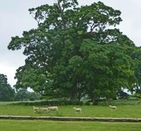 Following like sheep . . . Lacock Abbey
