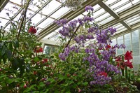 Inside the Greenhouse - Lacock Abbey