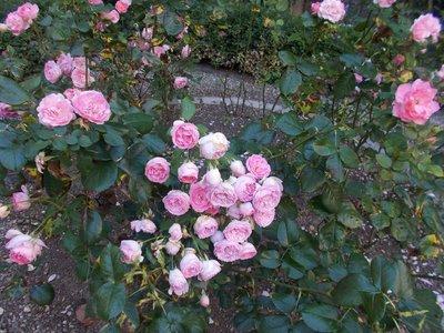Garden of Maison Tavel.
