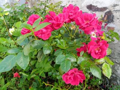 Flowers near Castle.