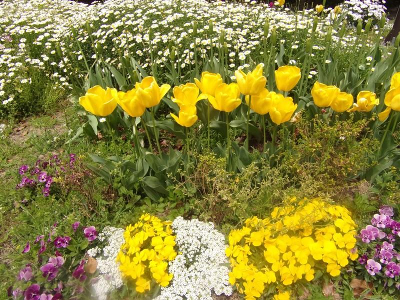 Flowers in Ohori Park.