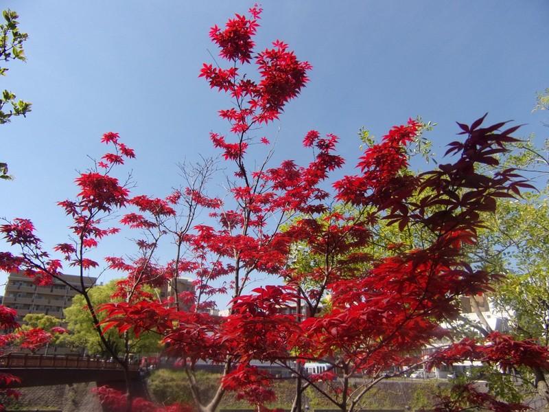 Colourful Trees.
