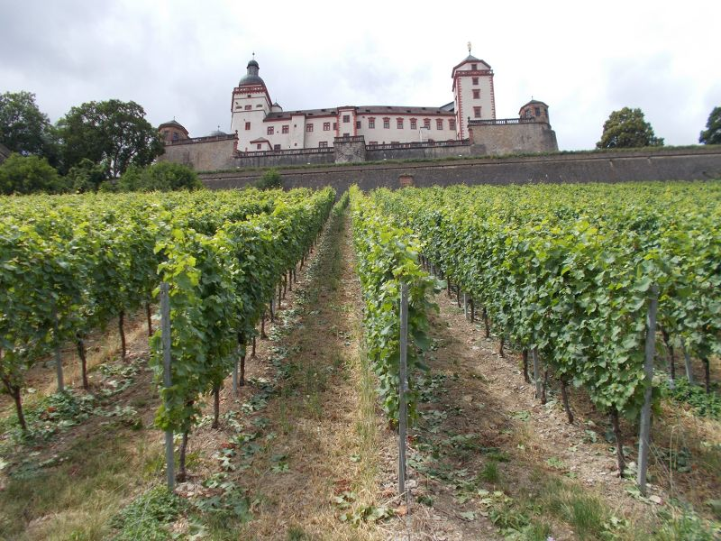 The fortress from the vinyards. - Würzburg