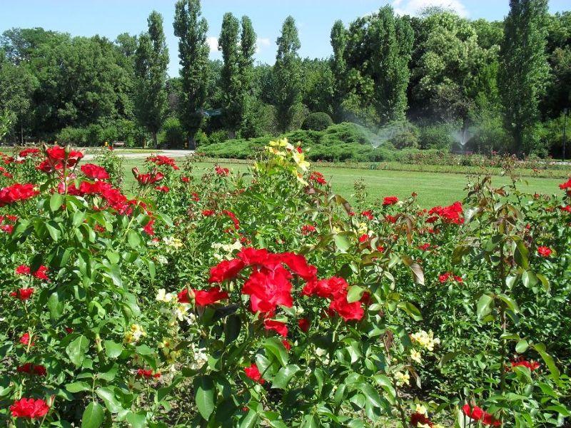 Flower gardens - Bucharest