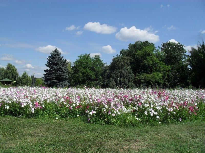 More flower filled gardens - Bucharest