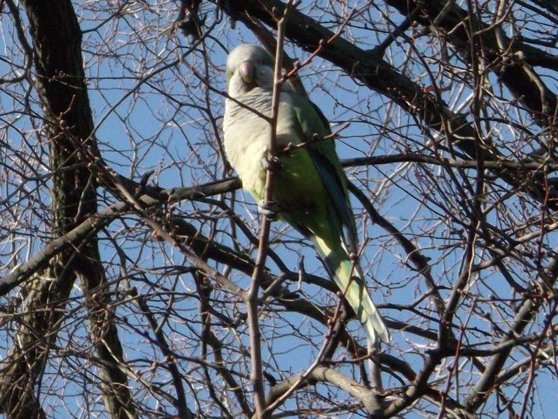 Wildlife, Casa de Campo Gardens. - Madrid