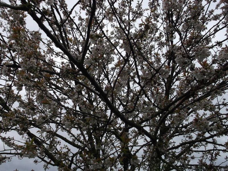 large_6152405-Spring_Flowers.jpg