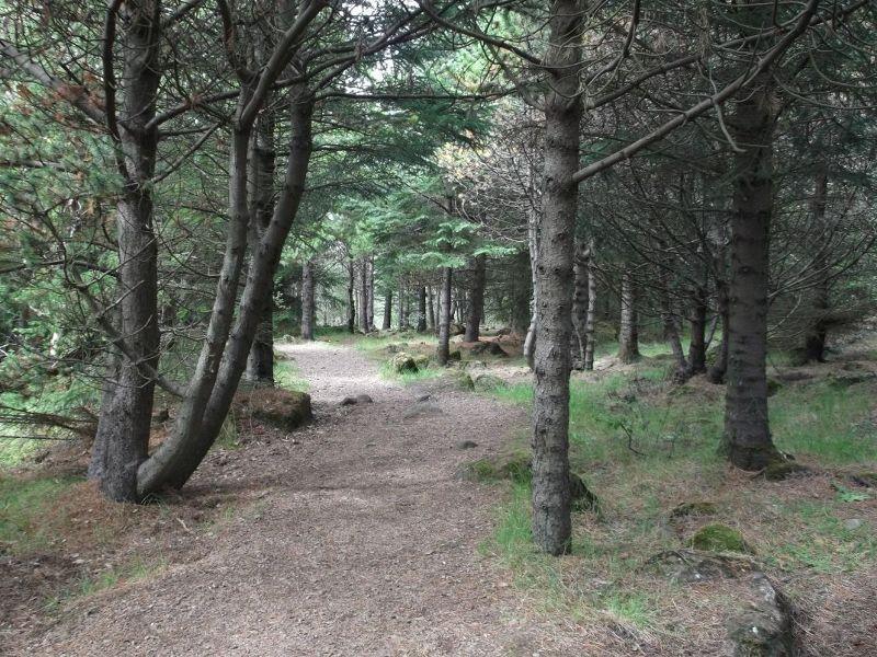 The woods around Perlan. - Reykjavík