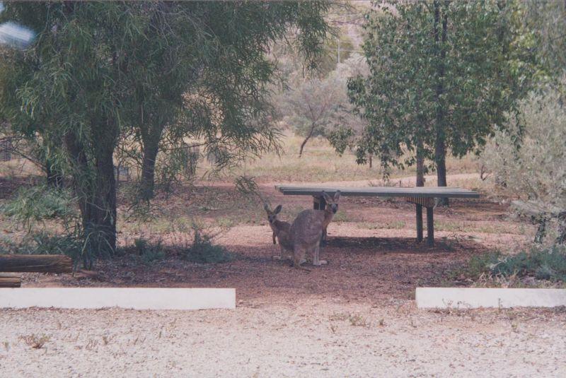 large_6760783-The_Olive_Pink_Botanical_Gardens.jpg