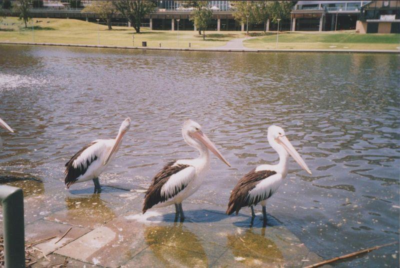large_6761298-The_River_Torrens_Adelaide.jpg