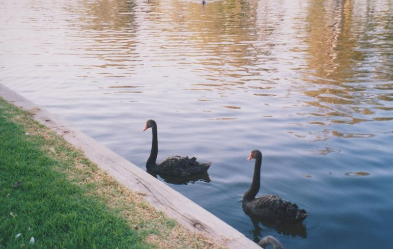 large_6765505-River_Torrens_Adelaide.jpg