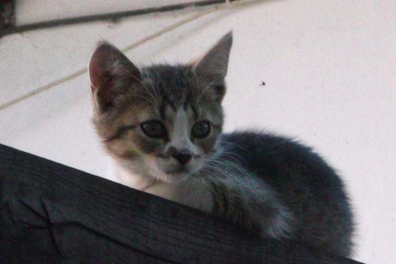 large_6789914-Kittens.jpg