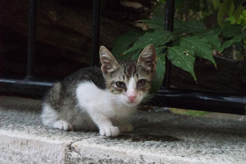 large_6790536-Kittens.jpg