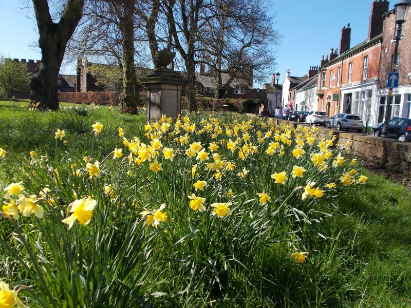 large_7038568-Daffodils_by_the_cathedral_Carlisle.jpg