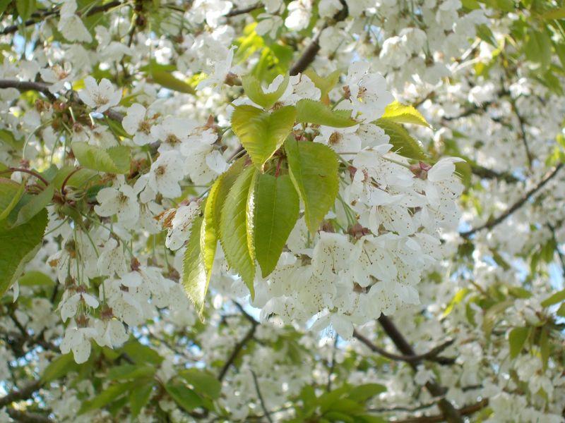 large_7039229-Springtime_Blossoms.jpg