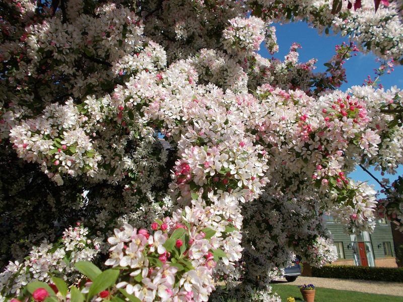 large_7039232-Springtime_Blossoms.jpg