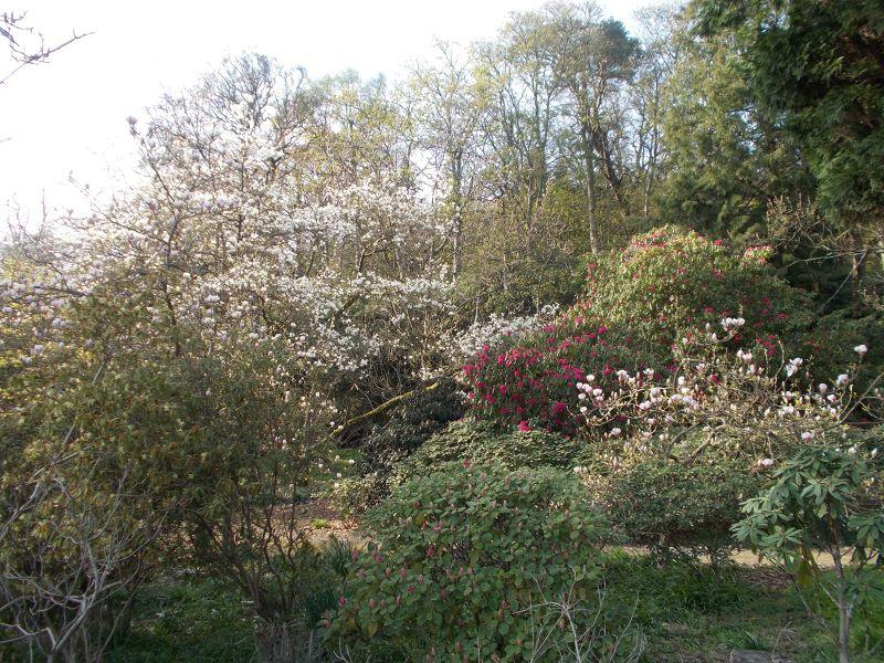 large_7039234-Springtime_Blossoms.jpg