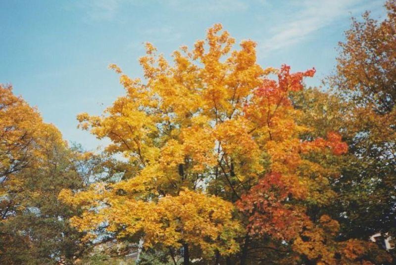 Glorious Polish Autumn, Lebork. - Poland