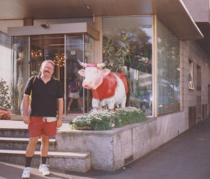 Cows In Zurich