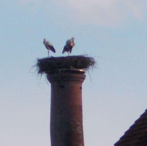 Storks - Fürth