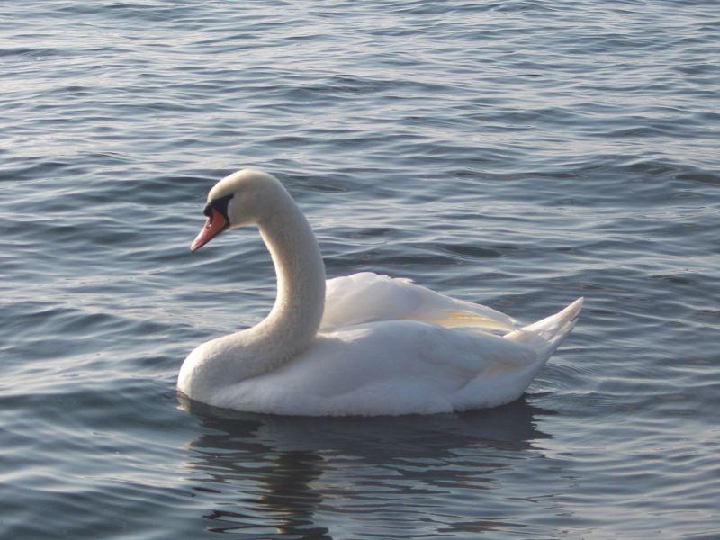 Wildlife On The Lake