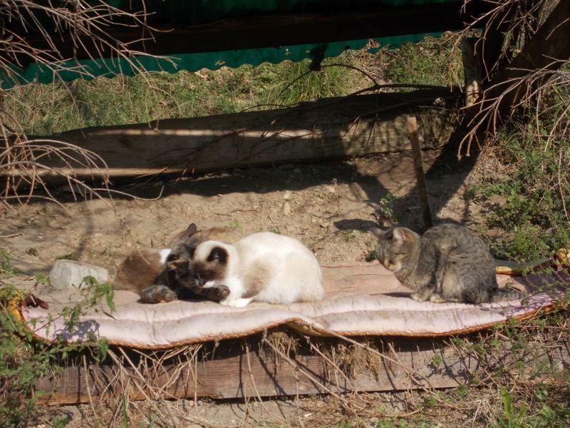 Cat Sanctuary