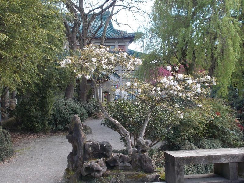 large_7350034-Dr_Sun_Yat_Sen_Park_Vancouver.jpg