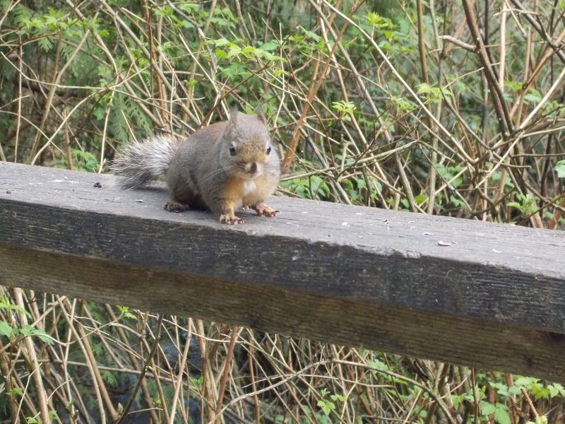 large_7351272-Friendly_squirrel_Vancouver.jpg