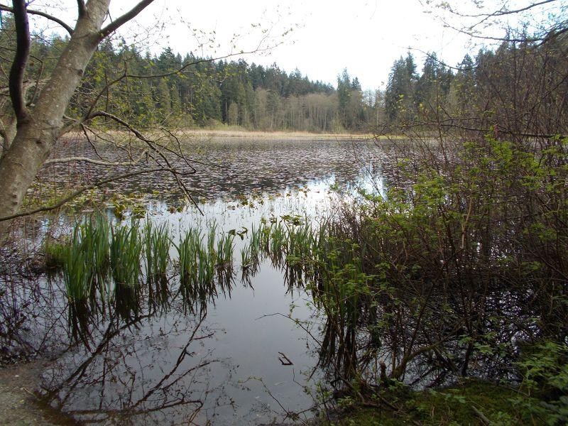 large_7351279-Beaver_Lake_Vancouver.jpg