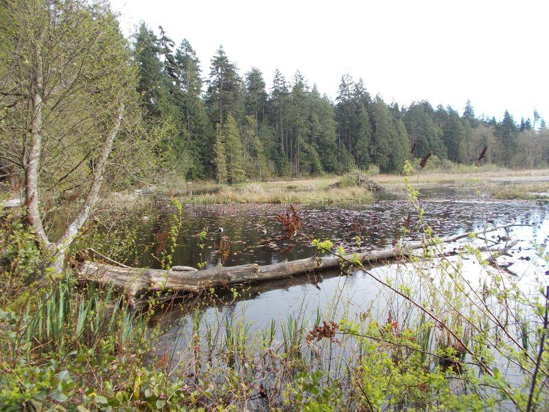 large_7351281-Beaver_Lake_Vancouver.jpg