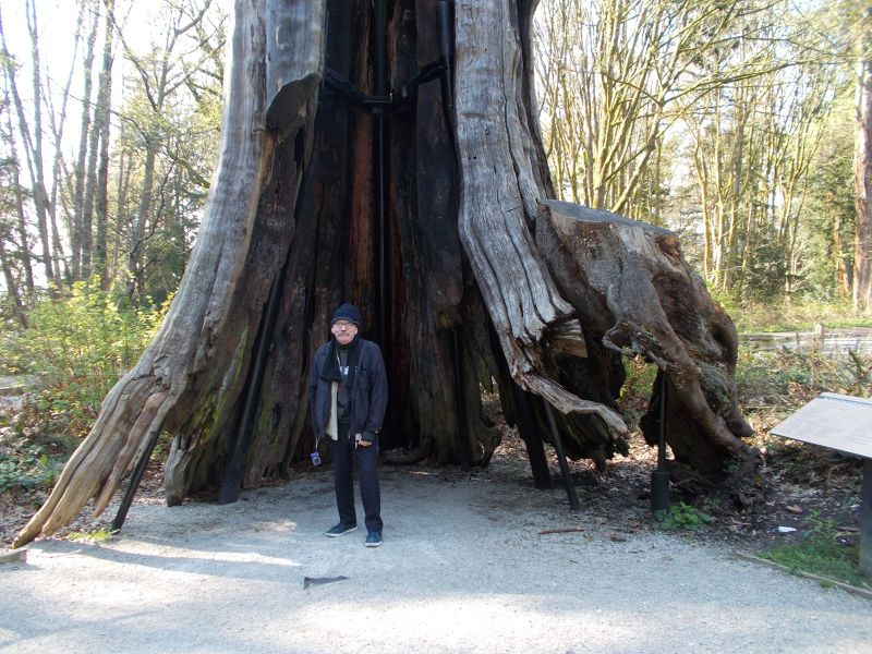 large_7351310-Hollow_Tree_Stanley_Park_Vancouver.jpg