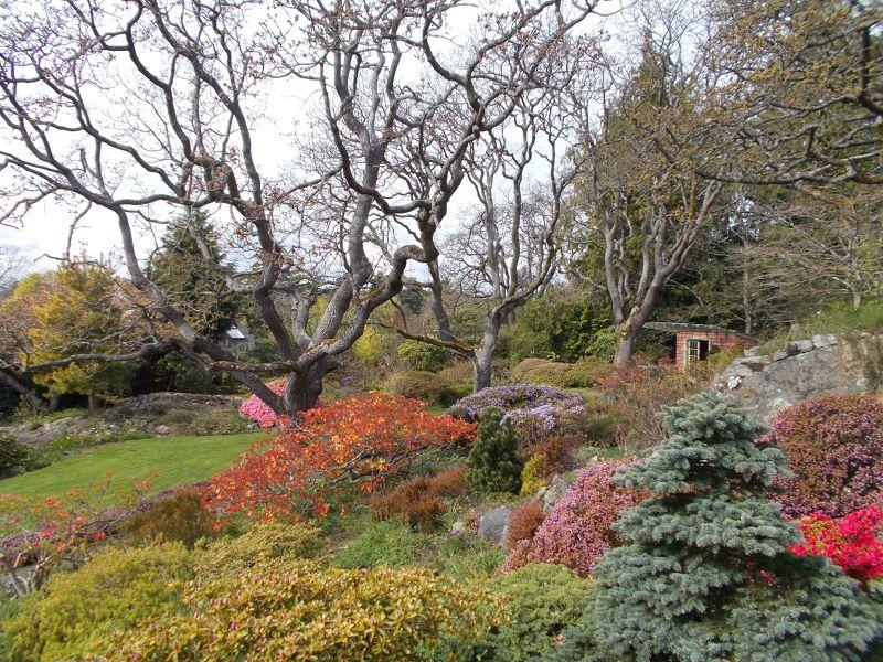 large_7355349-The_amazing_Abkhazi_Gardens_Victoria.jpg