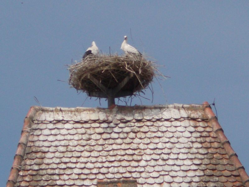 Storks On Roofs.
