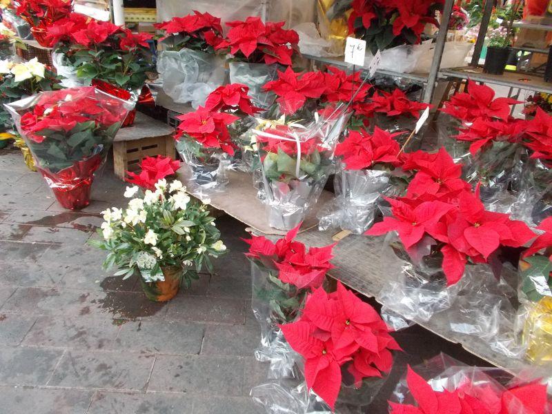 Flower Market, Cours Saleya. - Nice