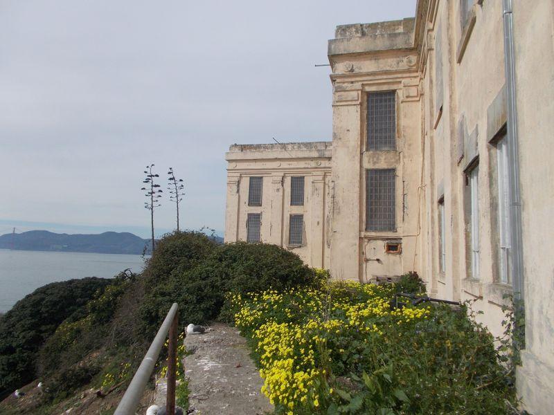large_7574237-Alcatraz_the_flowers_San_Francisco.jpg