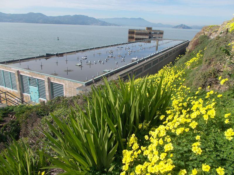 large_7574239-Alcatraz_the_flowers_San_Francisco.jpg
