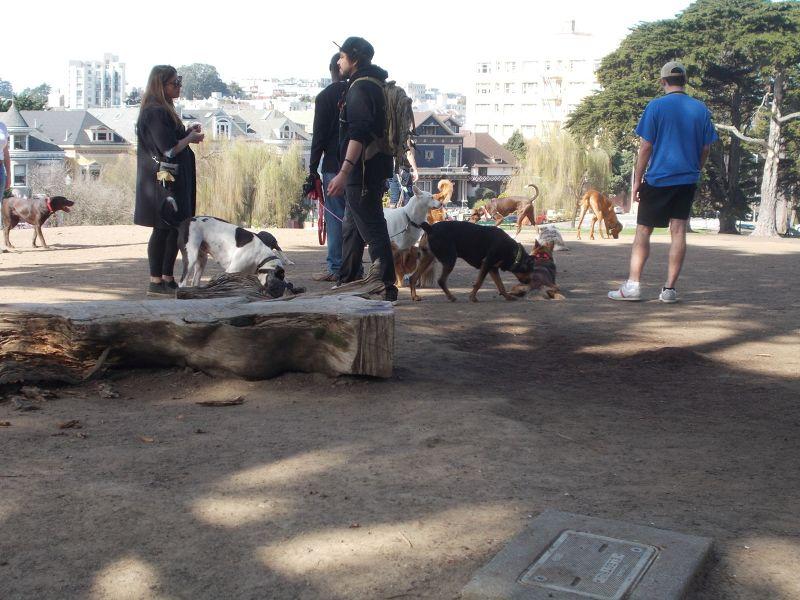 large_7574468-Doggie_play_area_San_Francisco.jpg