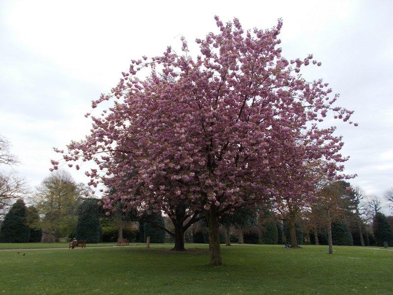 Grosvenor Park.
